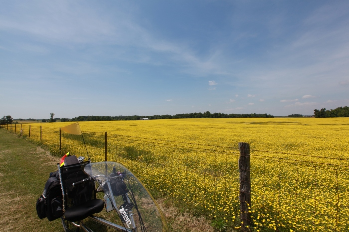 You'll forget the sun in his jealous sky. As we cycled in fields of gold.