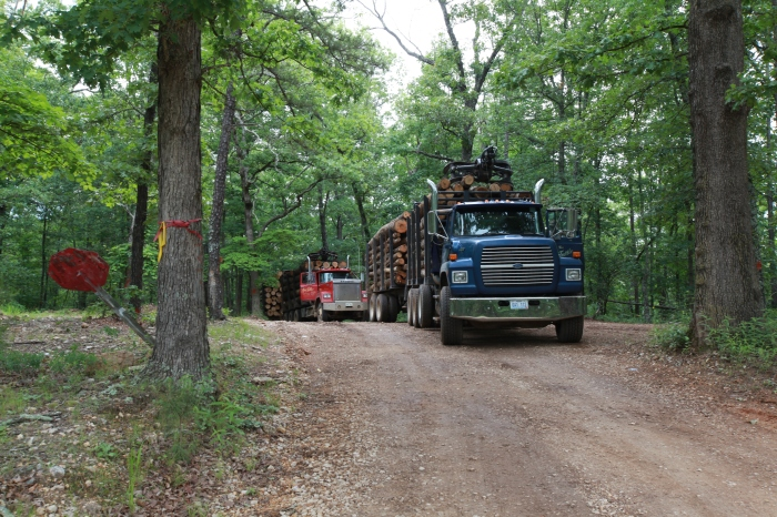 Logging trucks are scary. But, my nephew will love the picture, so I'm glad they used this road. --Near Eminence, MO