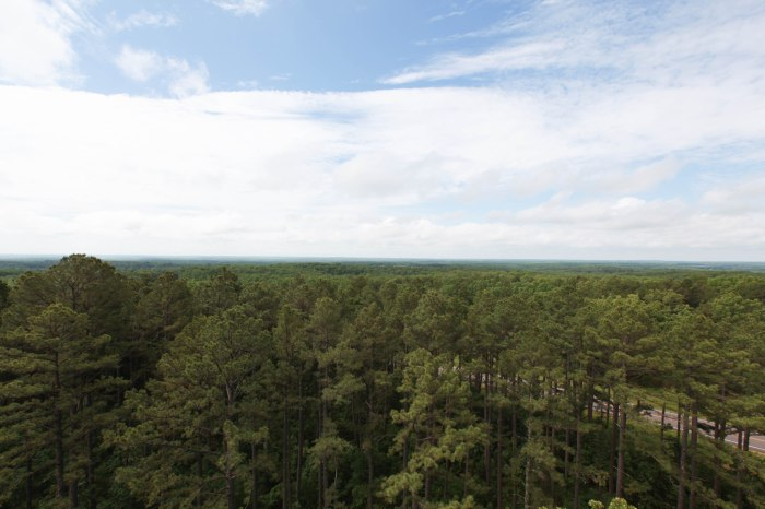 The view out from the fire tower. West of Alley Spring, MO