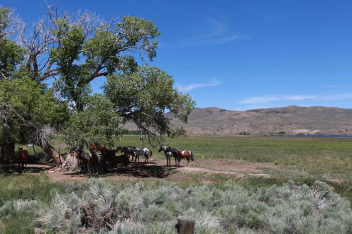 Some horses hanging out in the shade --Riverside, WY
