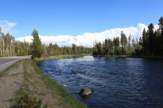 The Madison River -- Yellowstone National Park