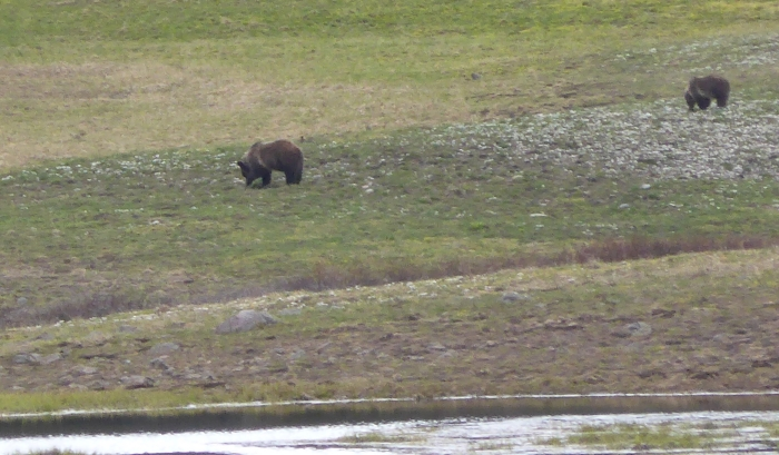 Seriously, there are bears there. Photo by Paul Dunt. --Togwotee Pass,WY