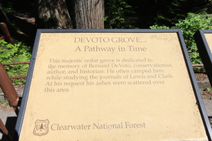 At Devoto Cedar Grove. —Clearwater National Forest, ID