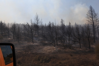 The fire has already burnt through this area. --Ochoco Pass, OR.