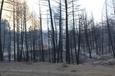 Flames are still burning in this area. --Ochoco Pass, OR.