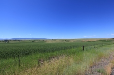Fertile land in the Nez Perce Indian Reservation, ID.