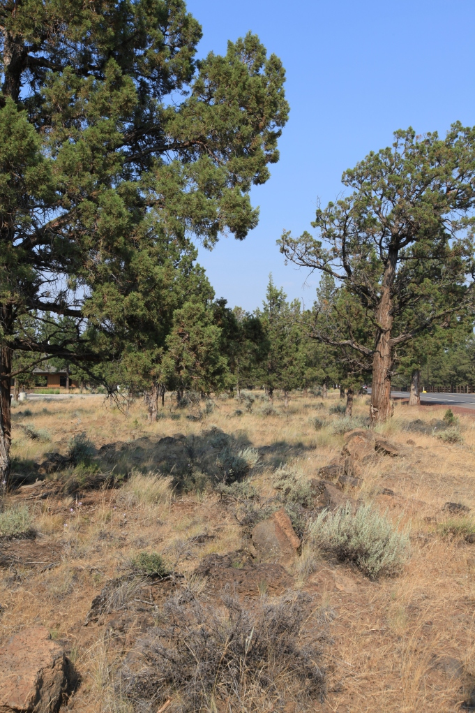 A strange mix of arid landscapes and Pacific Northwest Conifers. --Sisters, OR.