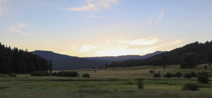 Elk running across a field as the sun sets over Payette National Forest, ID.